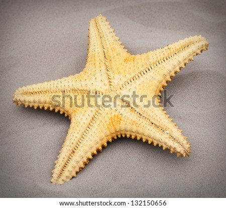 The Caribbean Starfish (Oreaster reticulatus) on the beach.
