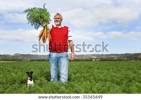 The carrot farmer