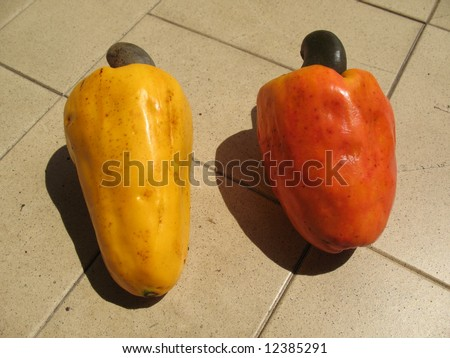 The cashew is a tree in the family Anacardiaceae. Its English name derives from the Portuguese name for the fruit of the cashew tree, caju, which in turn derives from the indigenous Tupi name, acajú.