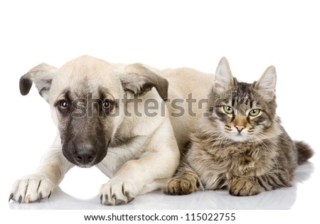 the cat and dog lie together. Isolated on a white background