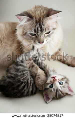 The cat and her kitten