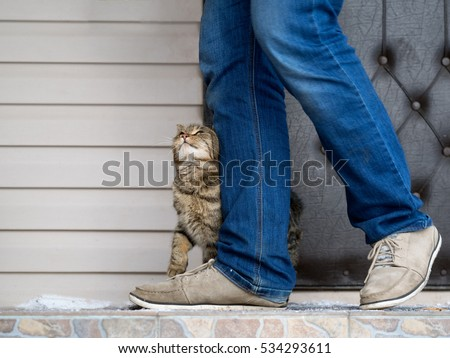 The cat and the owner. The cat pressed against the man's legs and trustingly looks #534293611