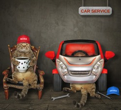 The cat auto mechanic are fixing a car for his boss that sits in an armchair and drinks coffee in the garage.