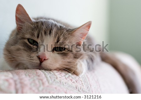The cat dozes on a sofa