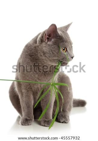 The cat eats a grass
