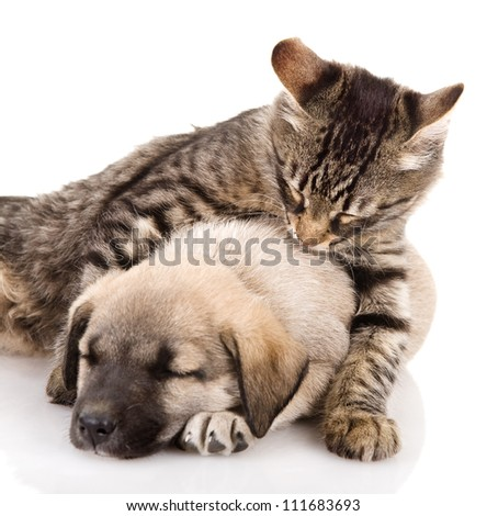 the cat embraces a dog. isolated on white background