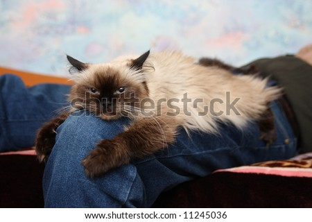 The cat embracing a knee of the owner