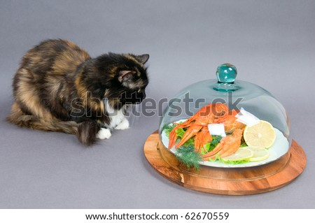 The cat examines a plate of Crayfish on a gray background.