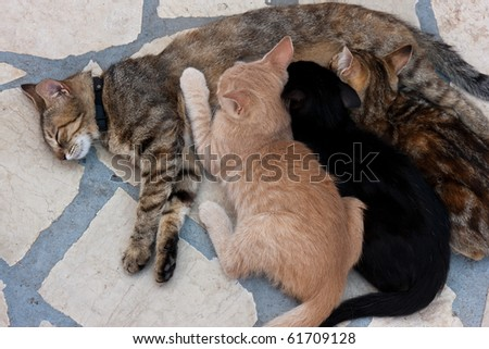 The cat feeds a kittens