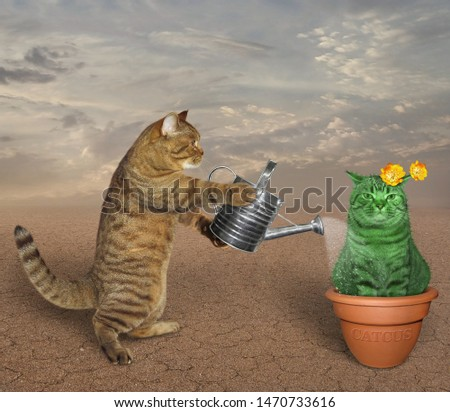The cat gardener waters an unusual cactus with an iron watering can in the desert.