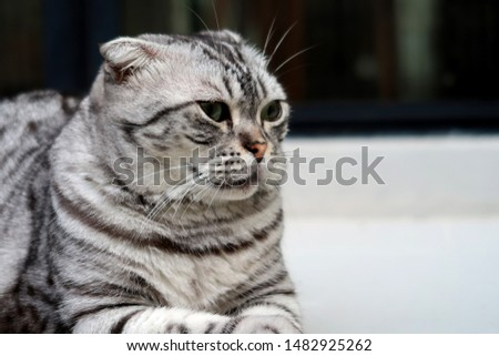 The cat have sad eyes when left alone to sit alone               #1482925262