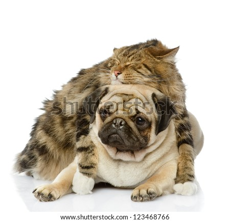 the cat hugs a dog. isolated on white background