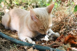 The cat hunted and caught a bird and eats outdoors