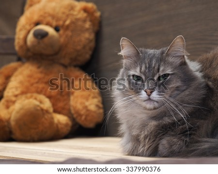 The Cat in the children\'s room. Portrait of a gray cat with green eyes on the background of children\'s soft toys Bear