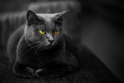 The cat is black but the eyes are yellow. Cause and beauty of the cat.