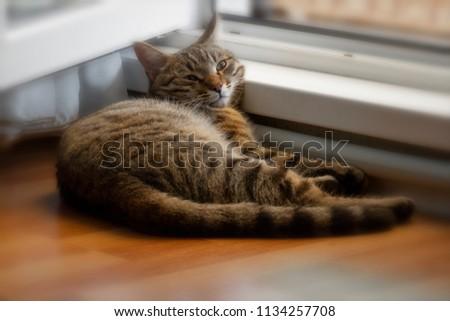 The cat is dozing near the open window.