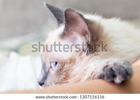 The cat is dozing, putting his paw on the man