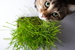 The cat is eating the grass 4