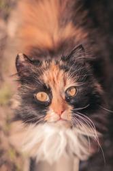 The cat is reddish-black.