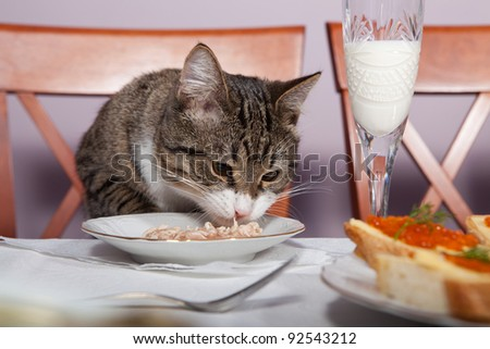 The cat is sitting at the table and eats with plates