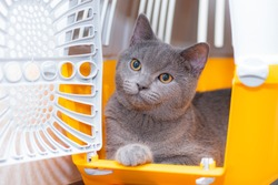 The cat is sitting in an animal carrier . Pet. Transportation of animals. Article about animal transportation. The safety of a pet.