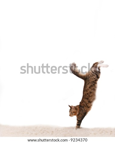 The cat jumps downwards on a white carpet