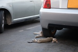 The cat lies in the shadow of the car and looks at the camera