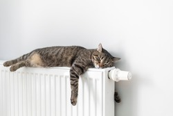 The cat lies on a heating radiator against the background of a gray wall. The cat warms up on the battery