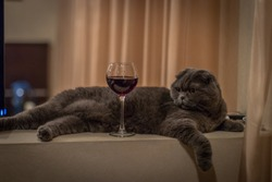 The cat lies with a glass of wine