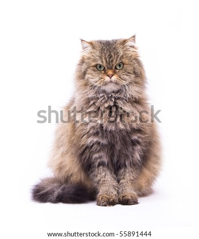 The cat on the white isolated background