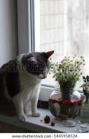 The cat on the windowsill shows interest in daisies