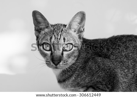 The cat on white background.