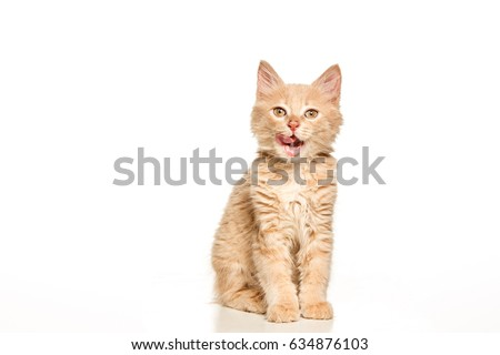 The cat on white background