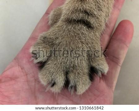 the cat paw #1310661842