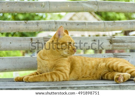 The cat sat on the seat #491898751