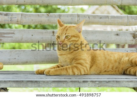 The cat sat on the seat #491898757