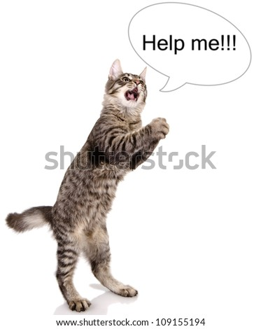 "the cat shouts ""help me"". isolated on white background"