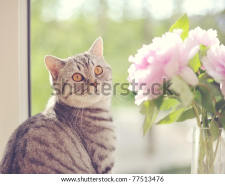 The cat sits at a window - stock photo