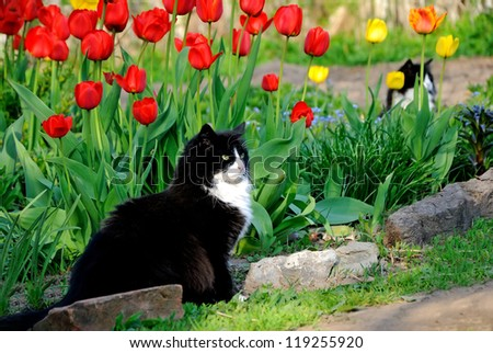 The cat sits in the garden among colorful tulips