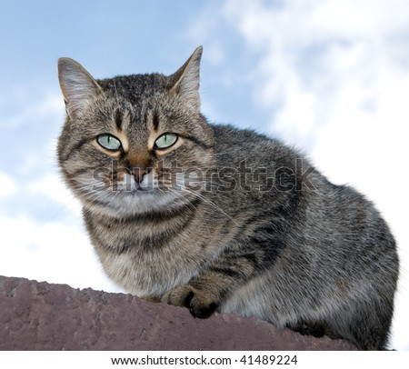 The cat sits on a fence - stock photo