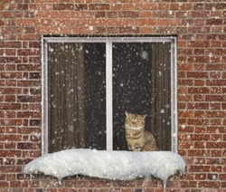 The cat sits on a window. It is snowing outside. Winter. Cold.