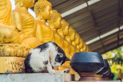The cat sits on the background of Buddha statues, Face of gold buddha, Thailand, Asia