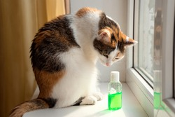 The cat sits on the windowsill and sniffs the sanitizer. Concept of personal hygiene and infection prevention
