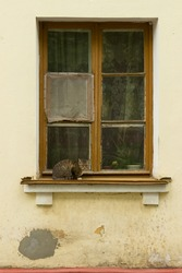 The cat sits on the windowsill of an old apartment building. A window in a poor residential area of a town or village.