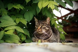 The cat sits under a plant and looking curiously to the side and watched. Portrait of a gray-brown tabby cat.