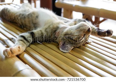 The cat sleep funny on the wood table.