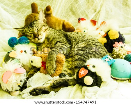 The cat sleeping with various toys around.