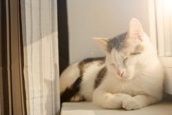 The cat sleeps on the windowsill. Sunset