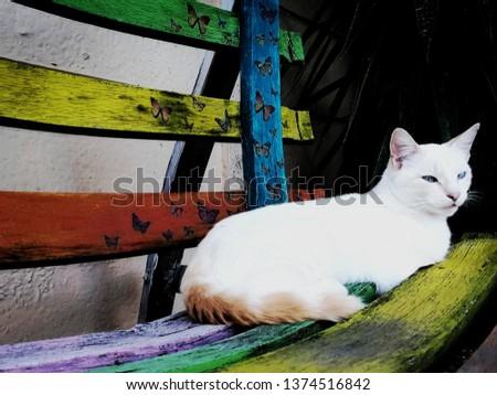 The cat, sunning #1374516842