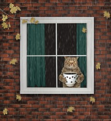 The cat with a cup of coffee is looking through the window. The leaves falls. It's raining. The autumn has come.